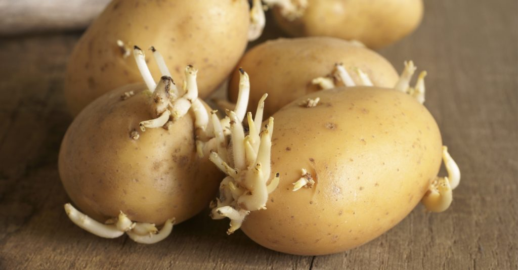 How to Know Whether Potatoes Have Gone Bad